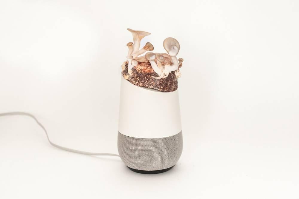 Project Alias – elektroniczny grzyb ma poskromić głosowych asystentów