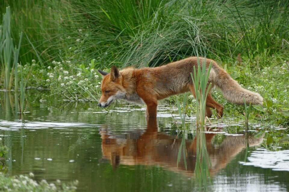 Firefox zmienia cykl wydawniczy. Nowe wersje będą pojawiać się co miesiąc