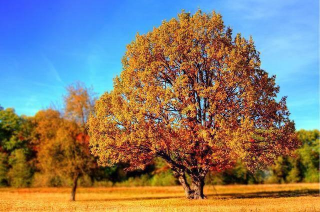 Jak zwiększyć motywację zespołu w okresie jesienno – zimowym?