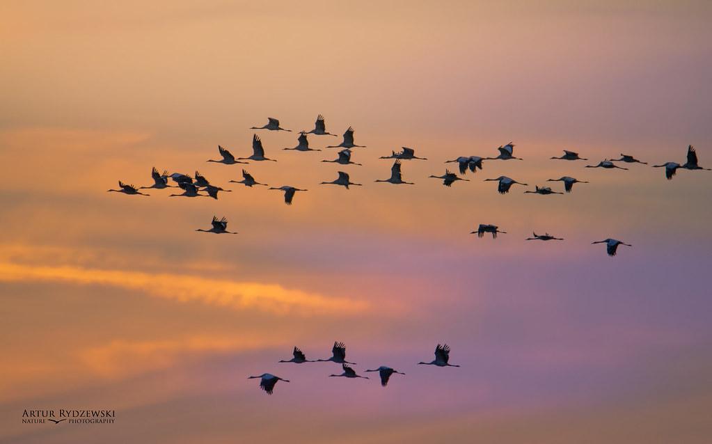 Migracja z Pythona na Go