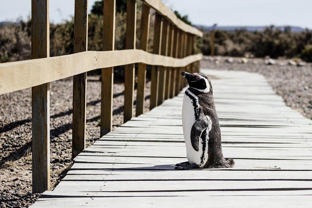 Linux 5.4 dostępny ze sterownikiem exFAT i opcjonalną blokadą uprawnień roota
