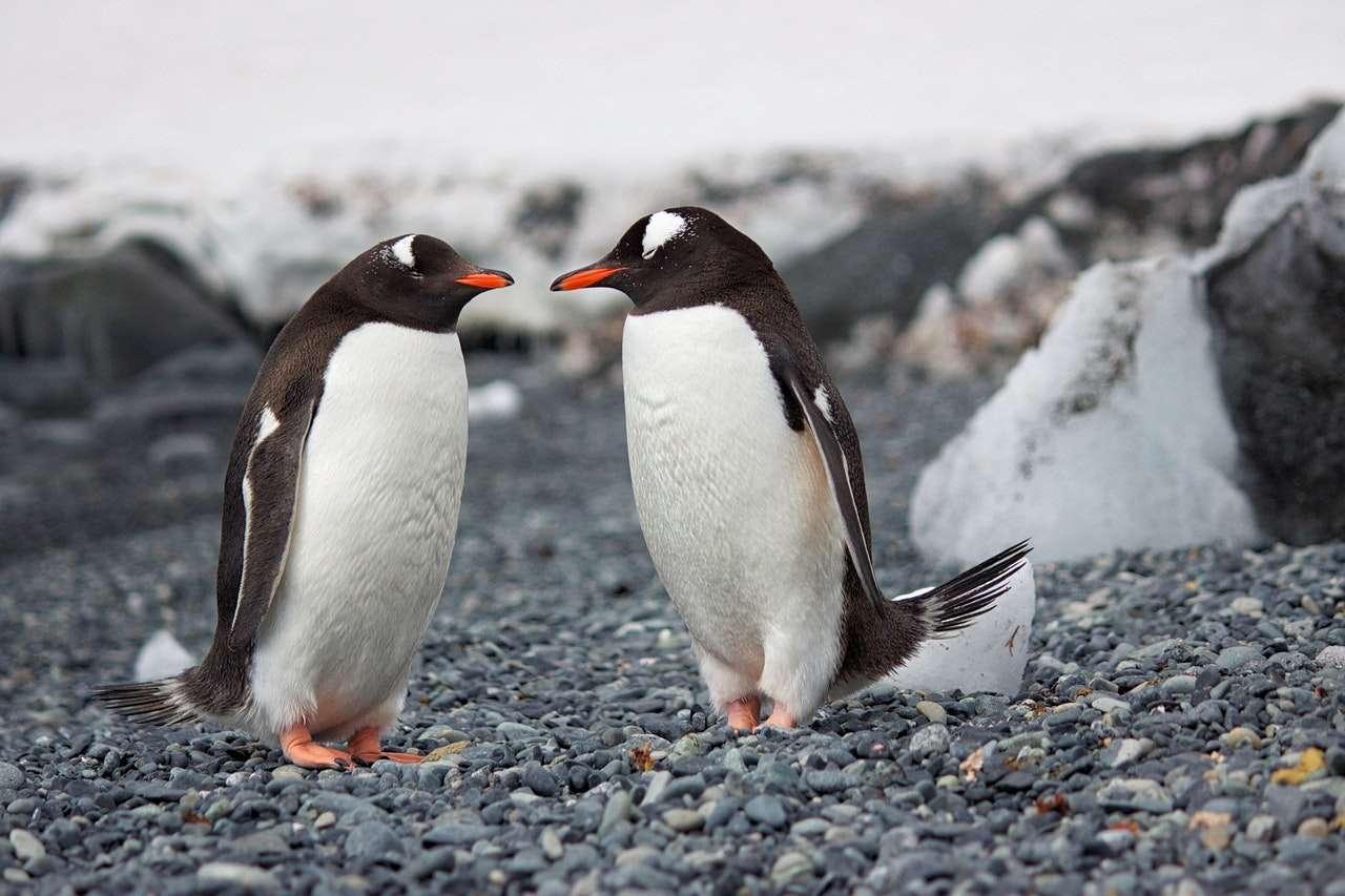 Linux 5.7 dostępny. Wśród nowości sterownik dla exFAT opracowany przez Samsunga